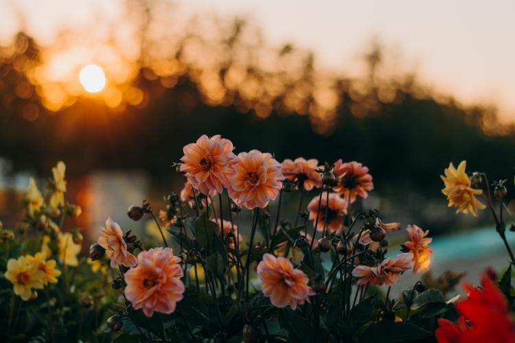 Photo of flowers with sun in background