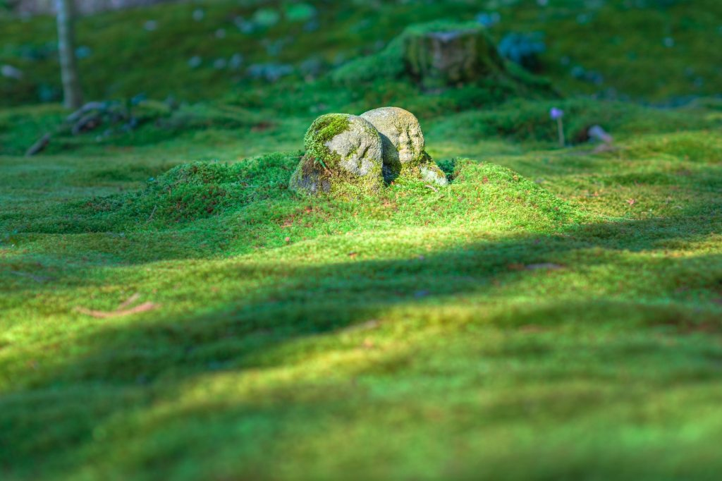 photo of grass field with two beings supporting each other