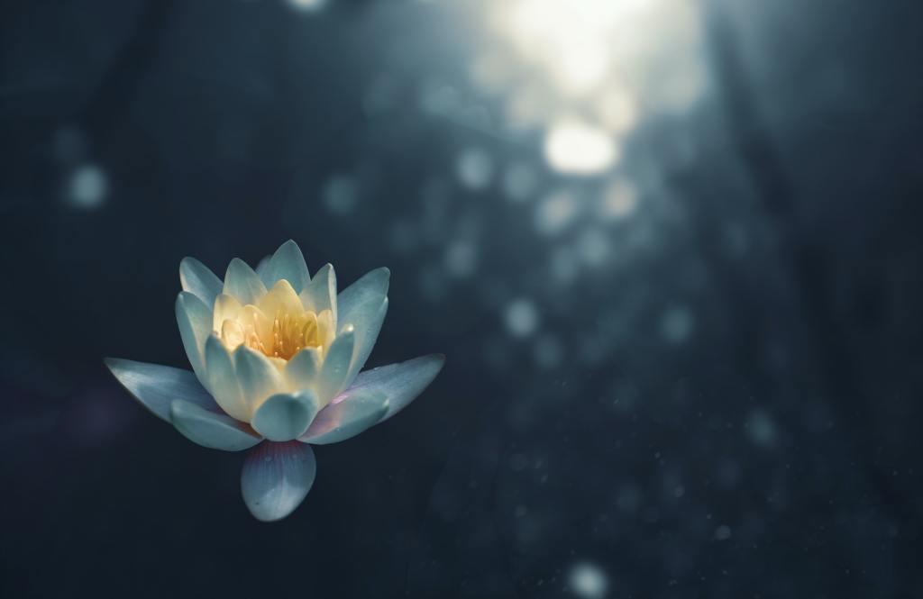 Image Description: Image of a lotus flower